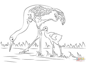 sandhill-crane-cute-chick-coloring-pages-2
